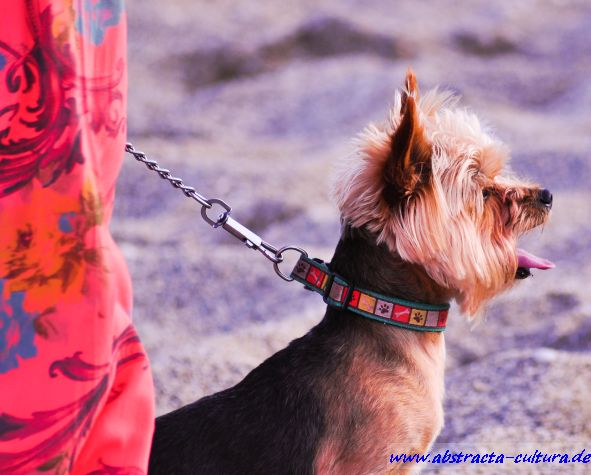 Strand Hund abstracta