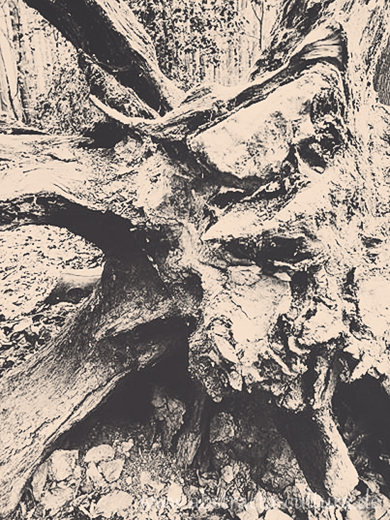 1510582_856094544407249_793804403583034521_n (1)www.abstracta-cultura.de_