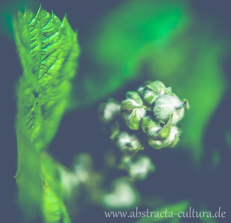 DSC_3125www.abstracta-cultura.de_